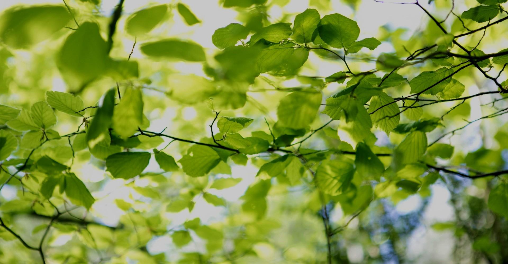 Révélez votre Nature Pour une vie sur mesure